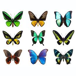 Timbres      du thème Papillons   '