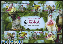 Fruit-Dove of Samoa, WWF m/s